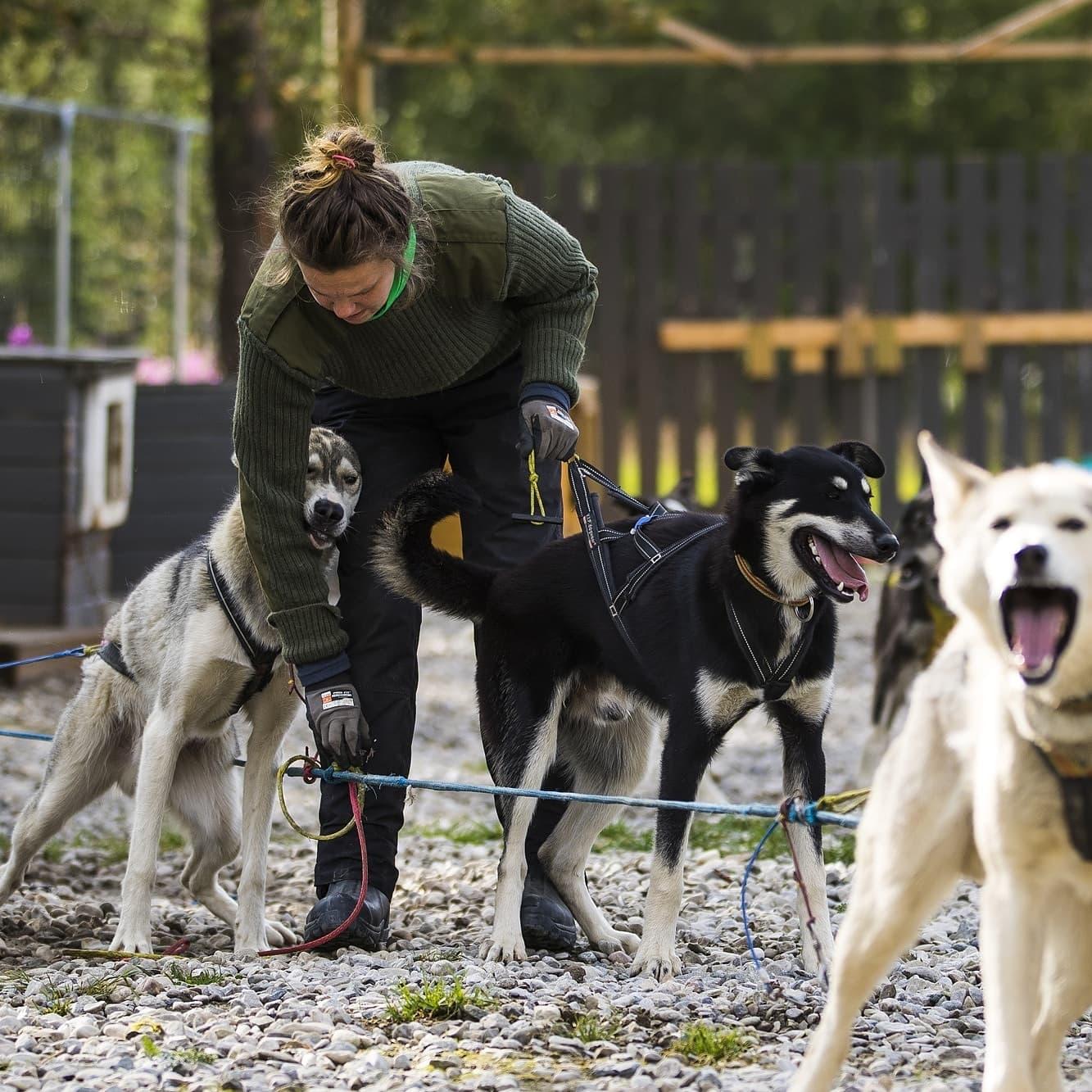 Topptur med hund og kløv