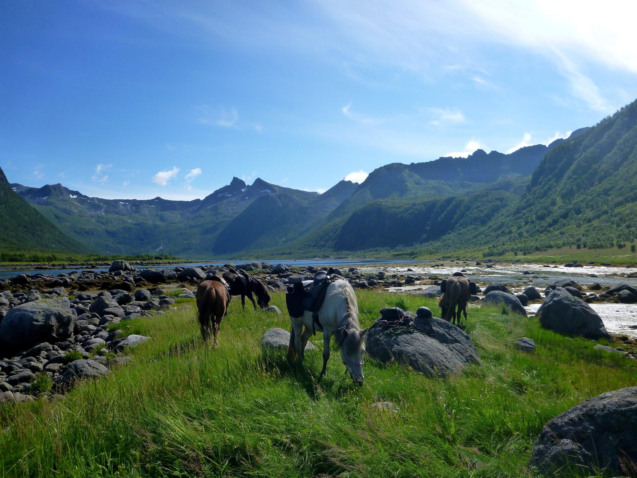 Flerdagers rideturer i storslått Lofotnatur